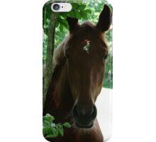 Curious Horse iPhone Case/Skin