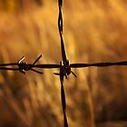 Barbed wire at sunrise by Craig Higson-Smith