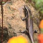 African Striped Skink on a rock by Maree  Clarkson