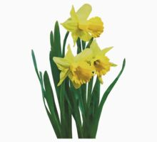 Daffodils Tall and Short by Susan Savad