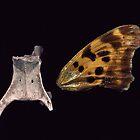 Backbone and Butterfly Wing by merrywrath