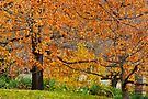 Mixing Of The Seasons by NatureGreeting Cards ©ccwri
