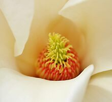 Center Of Magnolia Flower by Cynthia48