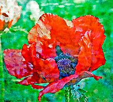 Poppy by Valerie  Fuqua