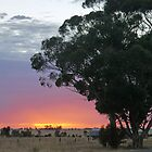Wimmera Sunrise by Graeme  Hyde