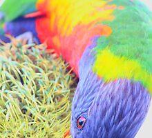 Rainbow Bird by rizinium