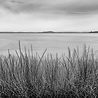 In the reeds - bw by Michael Howard