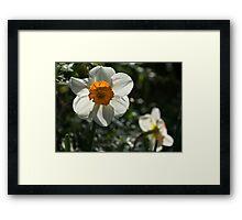 Spring Sunshine and Blooms Framed Print