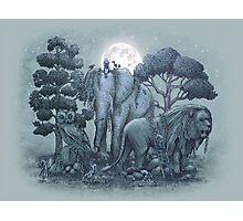 Midnight in the Stone Garden Photographic Print