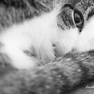 Curled Up by Lorelle Gromus
