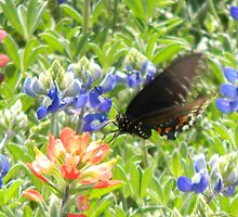 Swallowtail in Wildflowers - Nature's Art - view larger by Navigator