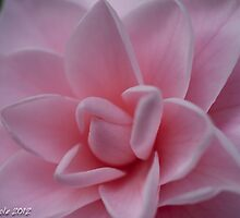 Pink Delight by Bryan W. Cole