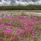 Pink to Peak by JamesA1