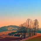 Trees, panorama and sunset | landscape photography by Patrick Jobst