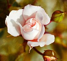 Vintage Rose by Christina Rollo