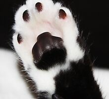 High 5!!! by GinasFineArt