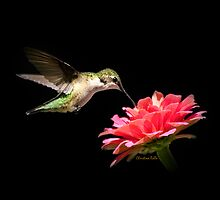 Whispering Hummingbird by Christina Rollo