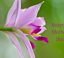 Mother's Day Orchid by photojeanic
