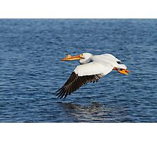 Pelican Taking Off Photographic Print