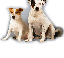 Russell Terriers by Denys Golemenkov