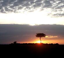 Kenya Sunsit safari by konga