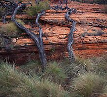 Artistic old tree roots by lynniegraham