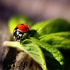 My first Ladybug of Spring 2014 by Tamara Brandy