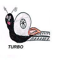 Turbo Snail Photographic Print