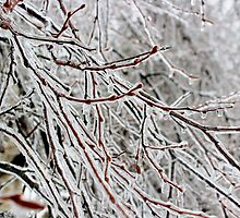 Ice Storm by Kathleen Daley