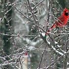 Brilliant Red Cardinal In Early Spring by Geno Rugh