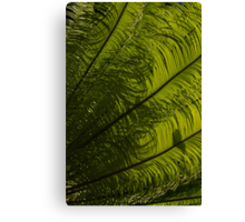 Tropical Green Curves and Diagonals - a Vertical View Canvas Print