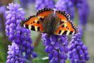 Wonder of Spring by Jo Nijenhuis
