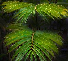 Jungle Beauty in Mindo, Ecuador by Al Bourassa