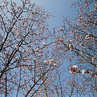 March Blossom (2014)  by CreativeEm