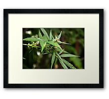 Cannabis II Framed Print