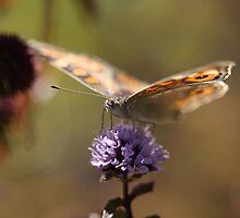 Butterfly eyes by Leisa Stear