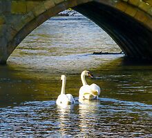 Through the Tunnel of Love by HandsinFocus