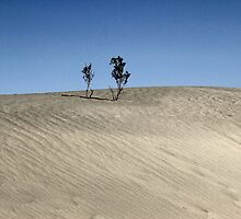 Mesquite Flats Sand Dunes by ptlpictures