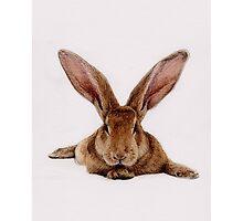 Flopsy Bunny by lillea-mira