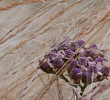Windblown bloom by Rod Raglin