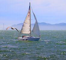 Sail the Bay by David Denny