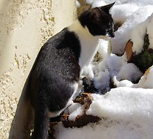 Boxys' First Snow by Francis Drake