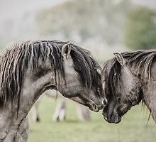 Rivals by Henri Ton