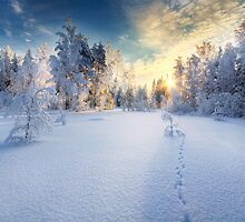 Winter by Mikko Lagerstedt