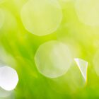 Green Abstract - Dewdrops in the Sunlit Grass - Natalie Kinnear  by Natalie Kinnear