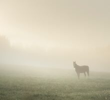 Morning Glory by Mikko Lagerstedt
