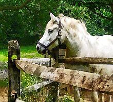 White Horse Looking Away by Susan Savad