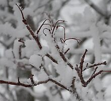 White Branches  by Jeffery Loving