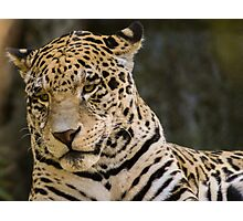 44 Panthera pardus Photographic Print