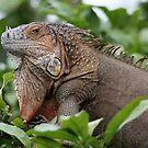 Iguana-Suit of Armour by hummingbirds